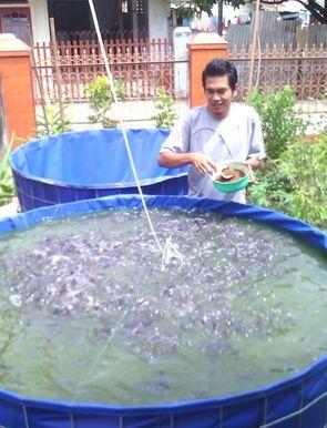 Budidaya Ikan Patin Di Kolam Terpal Bulat - InfoAkuakultur.com